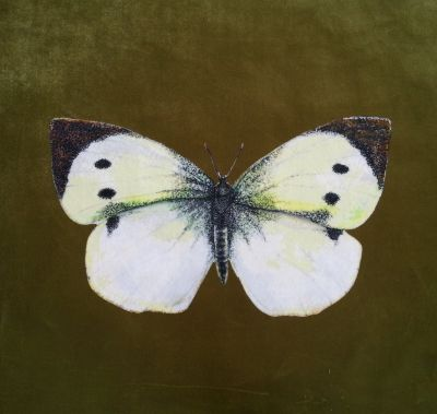 Velvet Cushion Panel British Butterfly Cabbage White Olive