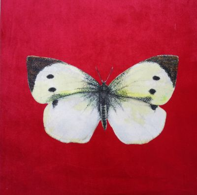 Velvet Cushion Panel British Butterfly Cabbage White Strawberry