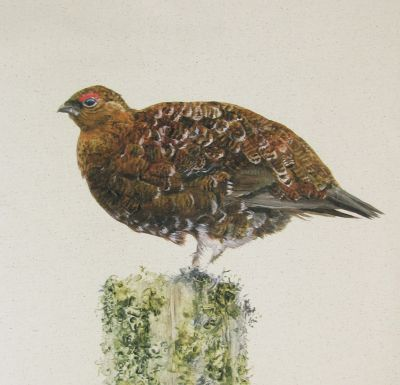 Organic Cotton Grouse Panel