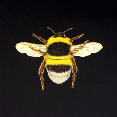 Velvet Bumblebee Cushion Panel Black