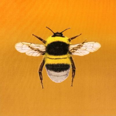 Velvet Bumblebee Cushion Panel Gold