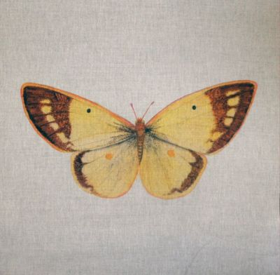 Clouded Yellow British Butterflies Cushion Panel