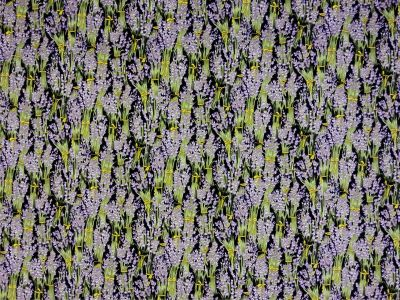 Lavender Fields Cotton Poplin Black D2