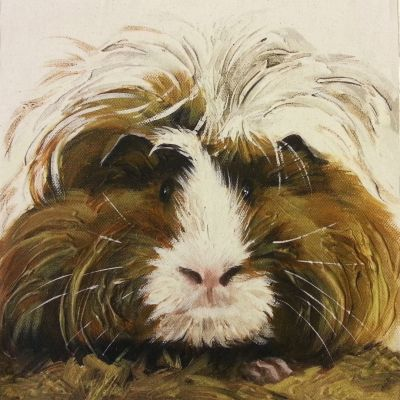 Organic Cotton Pets Guinea Pig Natural Panel