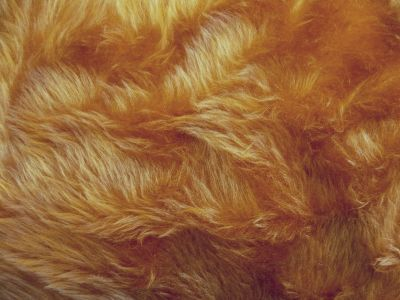 Honey Short Hair Fur W160