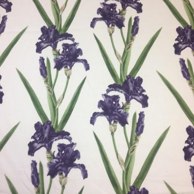 Irises Purple Tex Ex 1920