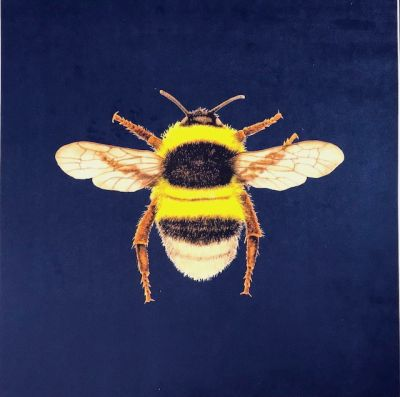 Velvet Bumblebee Cushion Panel Navy