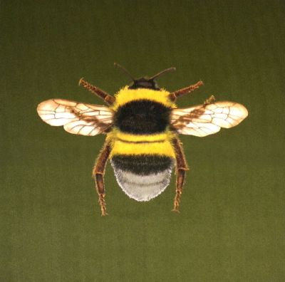 New Chenille Velvet Bumblebee Cushion Panel Olive