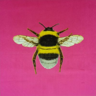 Velvet Bumblebee Cushion Panel Sherbet