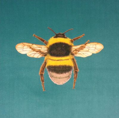 Velvet Bumblebee Cushion Panel Turquoise
